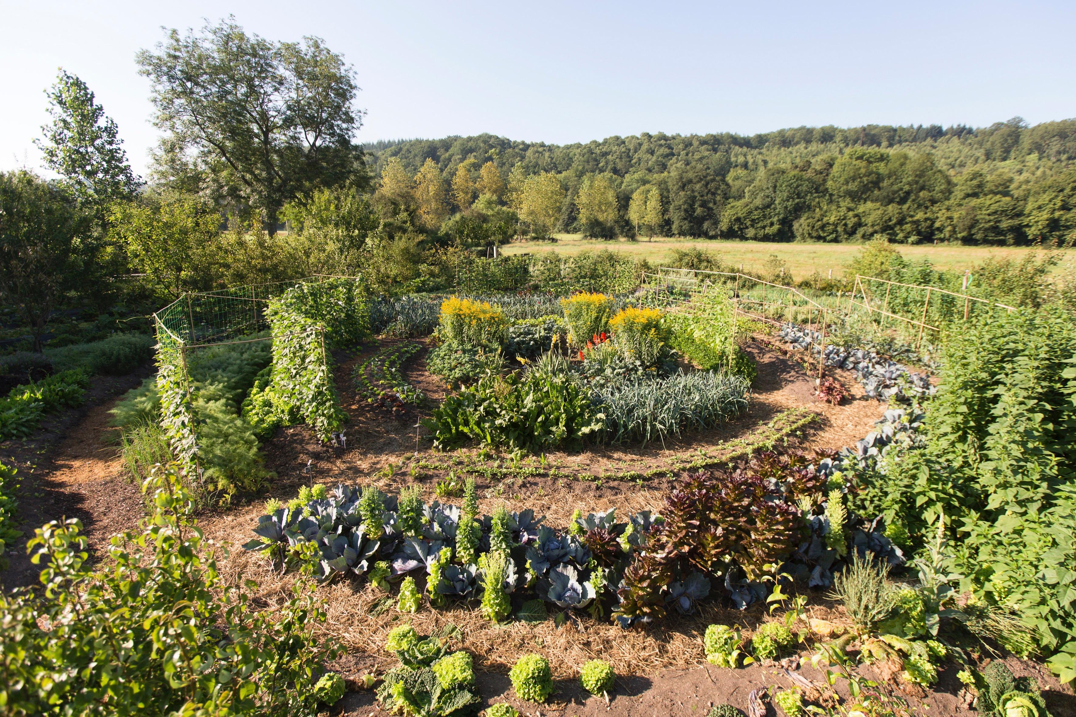 Etude sur la microferme permaculturelle et la for t jardin for Jardin mandala