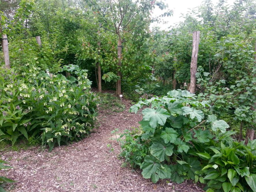 Ferme Du Bec Hellouin Peut On Vivre D Une Foret Jardin