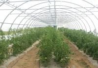 ferme-vergne-babouin-12.jpg