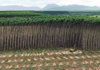 grande-image-plantation.jpeg