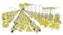 jardin-palissage-1 (1).png