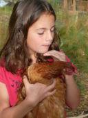 poules.JPG