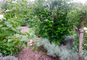 03-mini-jardin-foret.jpg