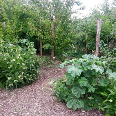 La mini forêt-jardin