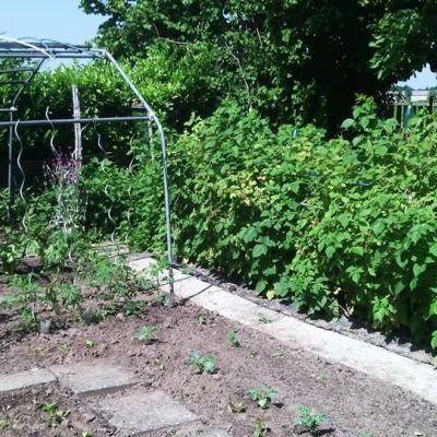 Le jardin de Mamie Pia