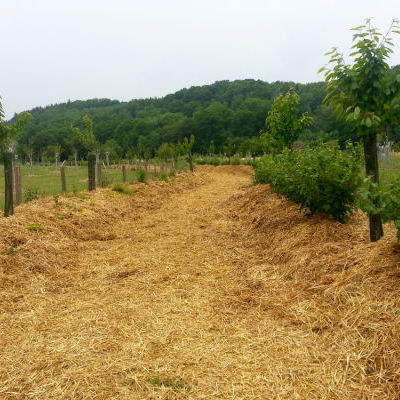 La forêt comestible : un chemin creux entouré d