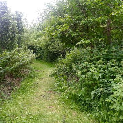 La forêt-jardin initiale