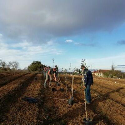 Chantier de plantation