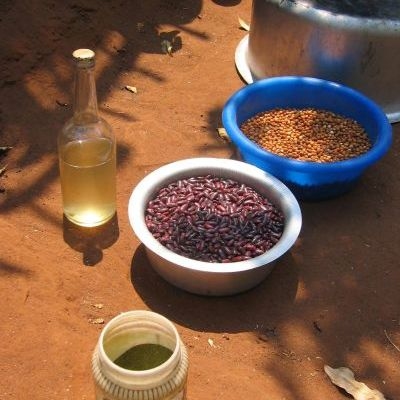 Insecticides issus du tephrosia vogelii, en poudre pour les semences et liquide pour les arbres