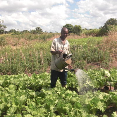 Irrigation - arrosage de Choux chinois.JPG