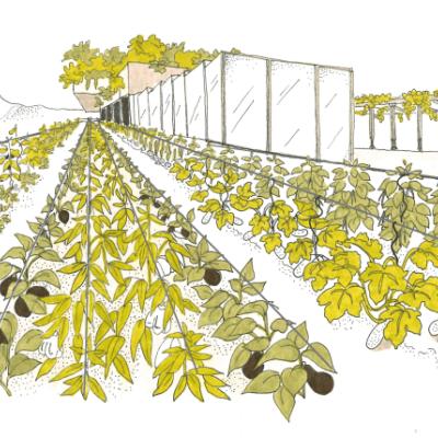Le jardin potager et la serre produiront toute l