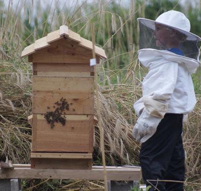 La ruche installe?_web.jpg