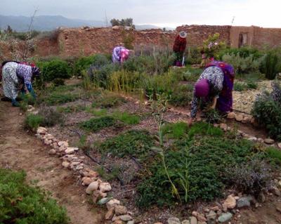 Le jardin agroécologique de France Maroc au Coeur