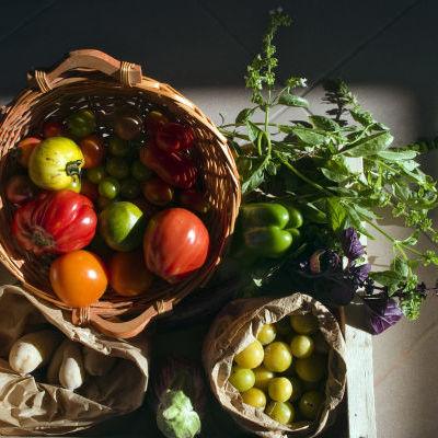 Un panier de légumes © Jardins Nourriciers