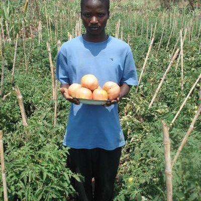 Un paysan fier de nous montrer la taille de ses tomates