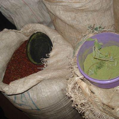 Poudre de tephrosia vogelii : conservation des semences